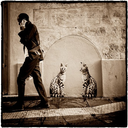 Street art, Sophie Photographe