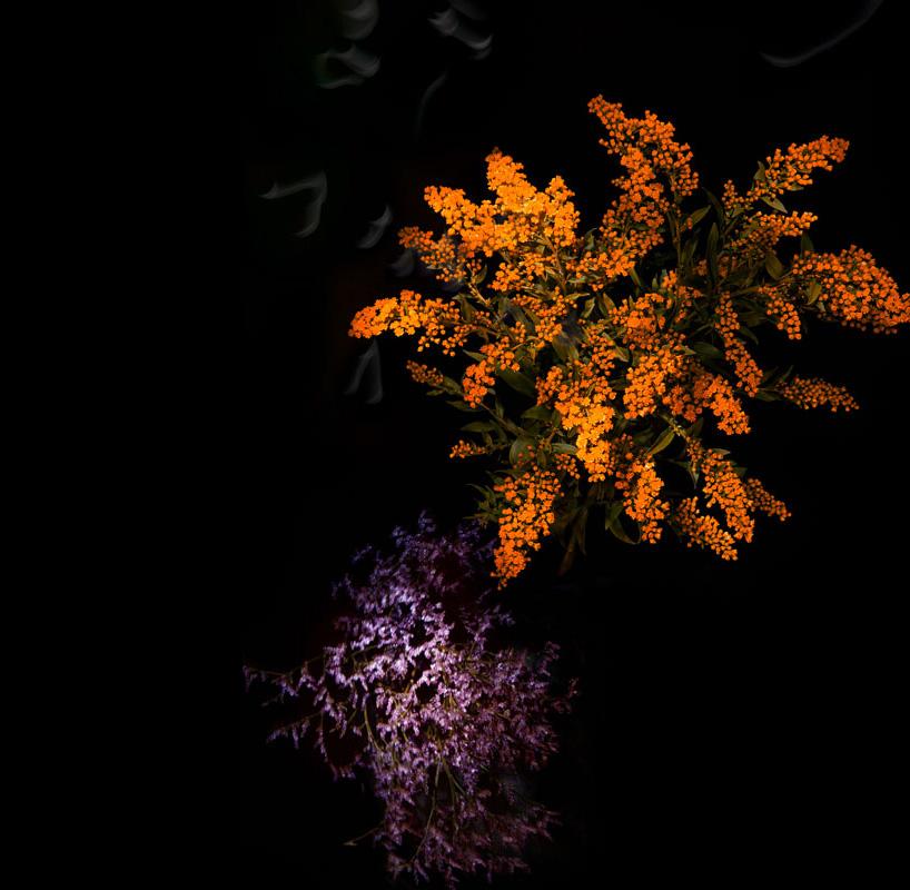 fleurs feu artifice sarah illenberger