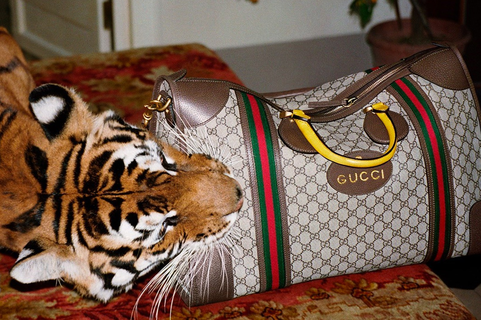 gucci-spring-summer-2017-campaign-6