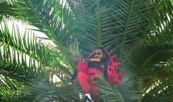 King's Dead » : le clip totalement perché de Kendrick…